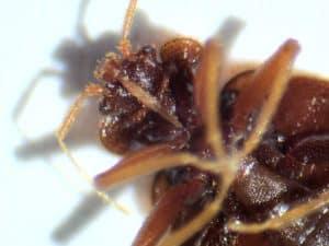 Plostica pod mikroskopom 1